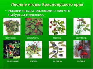 Лесные ягоды Красноярского края Назови ягоды, расскажи о них что-нибудь интер