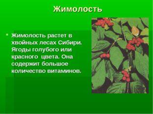 Жимолость Жимолость растет в хвойных лесах Сибири. Ягоды голубого или красног