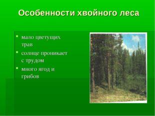 Особенности хвойного леса мало цветущих трав солнце проникает с трудом много