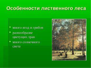 Особенности лиственного леса много ягод и грибов разнообразие цветущих трав м