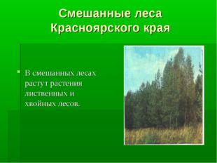 Смешанные леса Красноярского края В смешанных лесах растут растения лиственны
