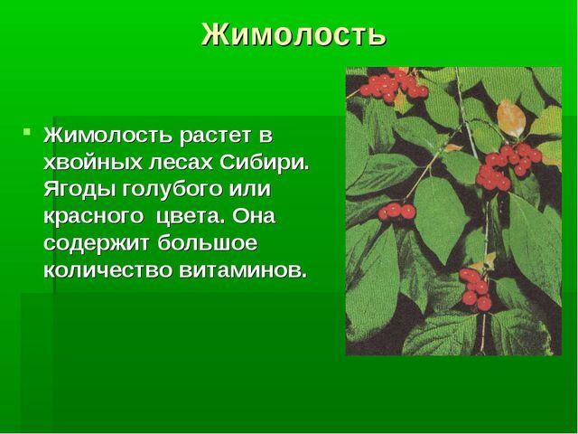 Жимолость Жимолость растет в хвойных лесах Сибири. Ягоды голубого или красног...