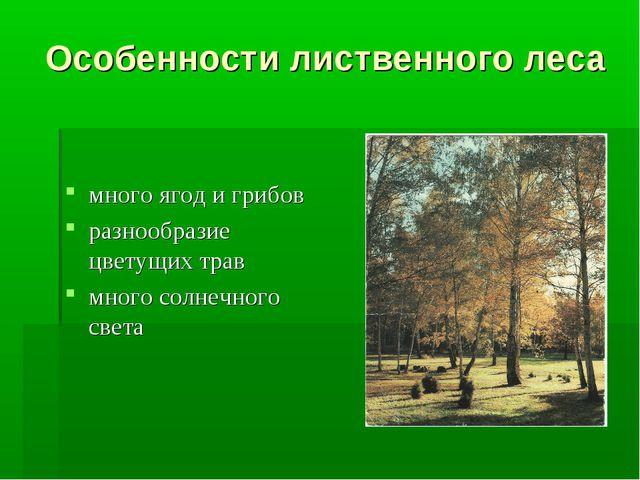 Особенности лиственного леса много ягод и грибов разнообразие цветущих трав м...