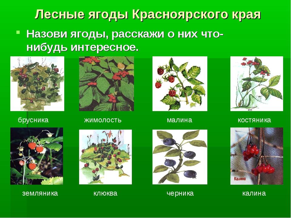 Лесные ягоды Красноярского края Назови ягоды, расскажи о них что-нибудь интер...