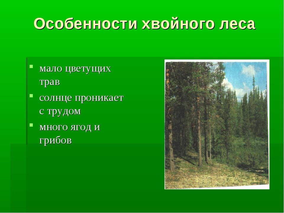 Особенности хвойного леса мало цветущих трав солнце проникает с трудом много...