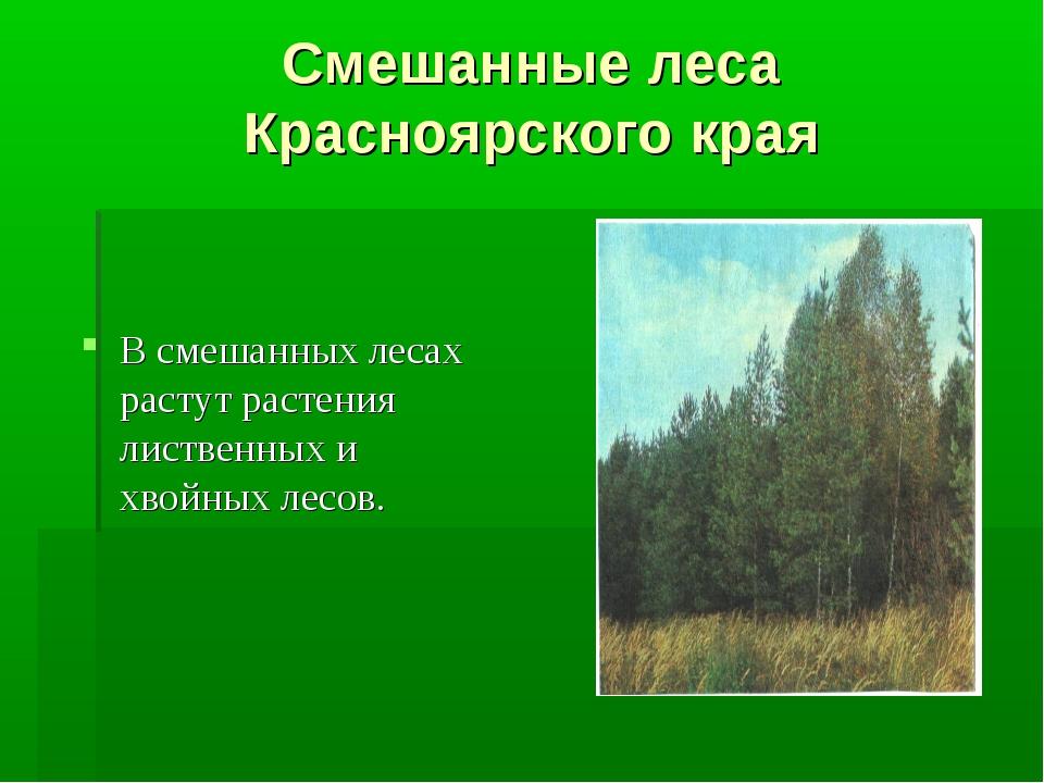 Смешанные леса Красноярского края В смешанных лесах растут растения лиственны...