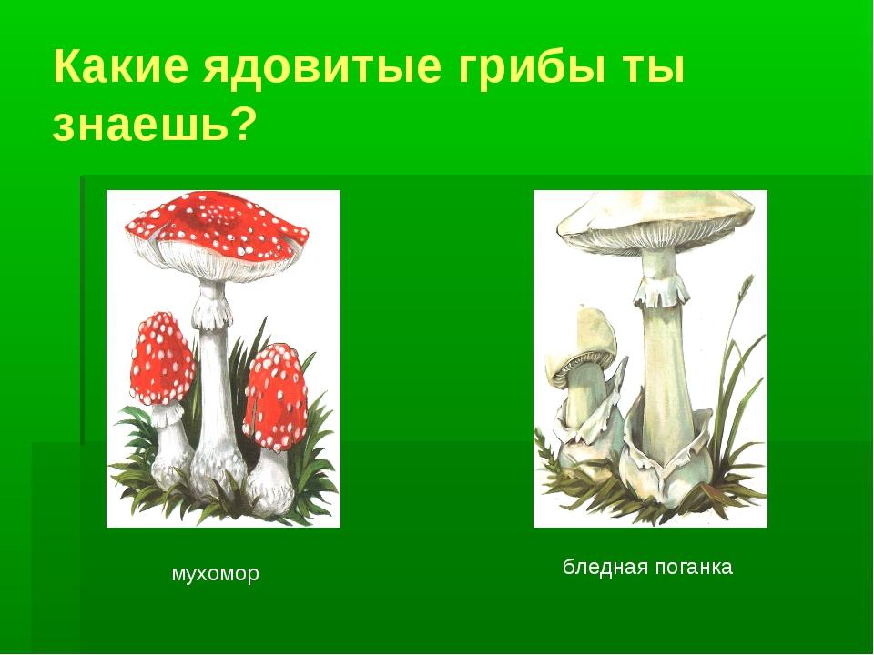 Какие ядовитые грибы ты знаешь? мухомор бледная поганка