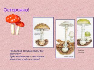 Осторожно! Никогда не собирай грибы без взрослых! Будь внимателен – это самые