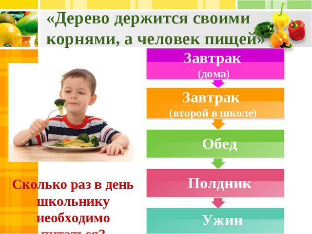 «Дерево держится своими корнями, а человек пищей» Сколько раз в день школьник...