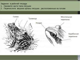 Задание в рабочей тетради Назовите части тела лягушки Перечислите вешние орга