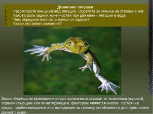 Движение лягушки Рассмотрите внешний вид лягушки. Обратите внимание на строен