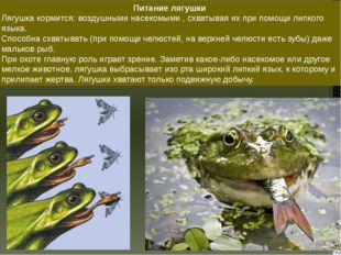 Питание лягушки Лягушка кормится: воздушными насекомыми , схватывая их при по