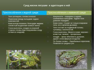 Сред жизни лягушки и адаптации к ней Приспособления к водной среде Приспособл