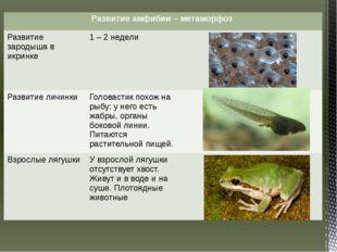 Развитие амфибии – метаморфоз Развитие зародыша в икринке 1 – 2 недели Развит