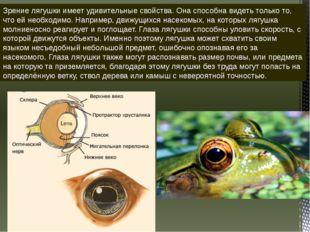 Зрение лягушки имеет удивительные свойства. Она способна видеть только то, чт