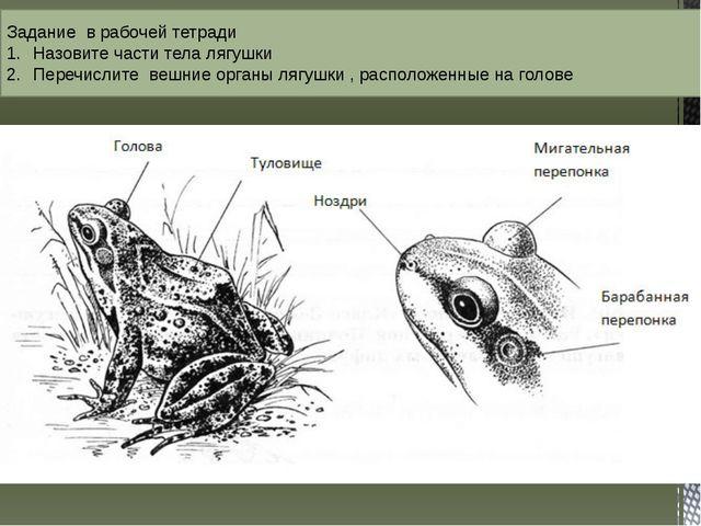 Задание в рабочей тетради Назовите части тела лягушки Перечислите вешние орга...