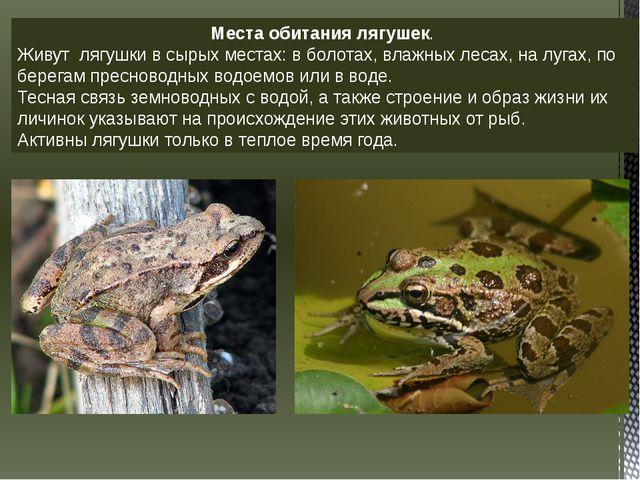 Места обитания лягушек. Живут лягушки в сырых местах: в болотах, влажных леса...