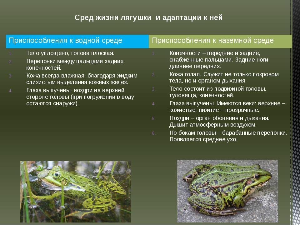 Сред жизни лягушки и адаптации к ней Приспособления к водной среде Приспособл...