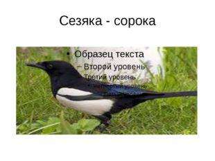 Сезяка - сорока