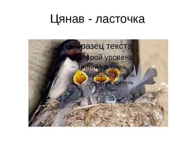 Цянав - ласточка