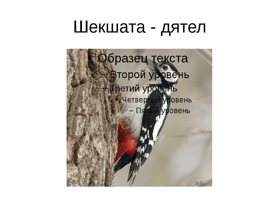 Шекшата - дятел