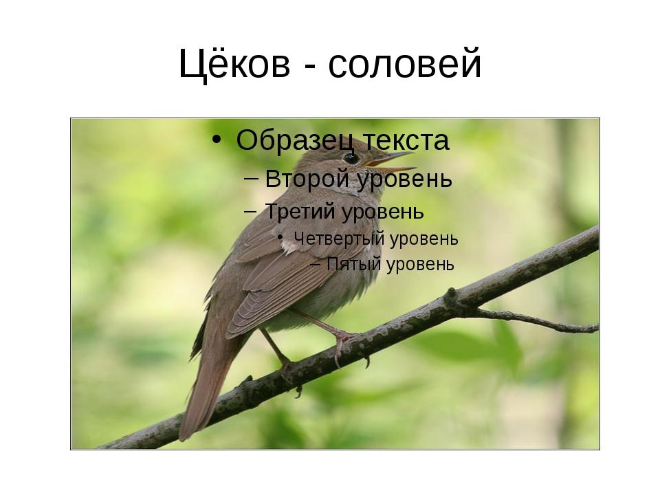 Цёков - соловей