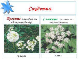 Соцветия Простые (на главной оси цветки – по одному) Сложные ( на главной оси