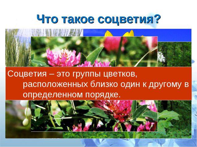Что такое соцветия? Соцветия – это группы цветков, расположенных близко один...