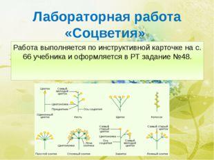 Лабораторная работа «Соцветия» Работа выполняется по инструктивной карточке н
