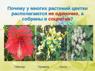 Почему у многих растений цветки располагаются не одиночно, а собраны в соцвет