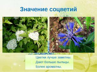 Значение соцветий Цветки лучше заметны. Дают больше пыльцы. Более ароматны. Б