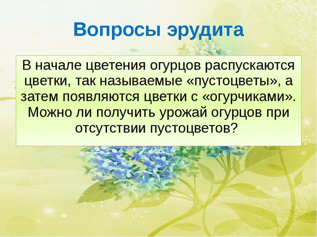 Вопросы эрудита В начале цветения огурцов распускаются цветки, так называемые...