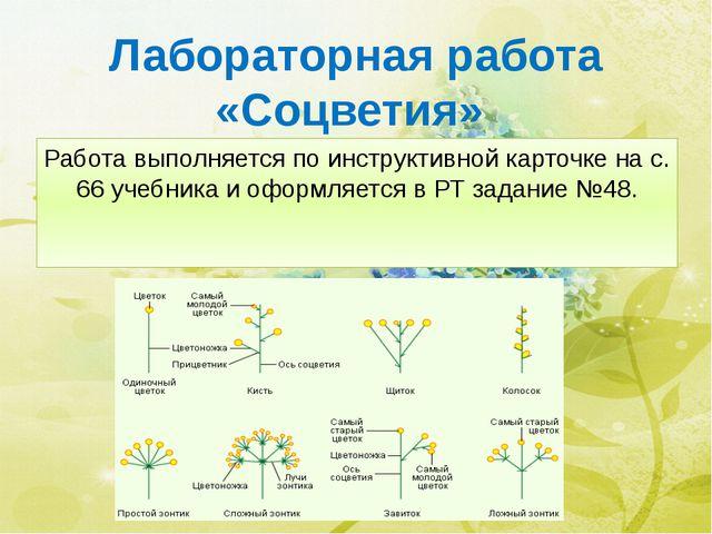 Лабораторная работа «Соцветия» Работа выполняется по инструктивной карточке н...
