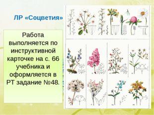 ЛР «Соцветия» Работа выполняется по инструктивной карточке на с. 66 учебника