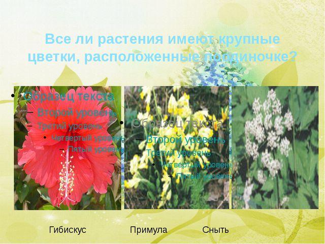 Все ли растения имеют крупные цветки, расположенные поодиночке? Гибискус Прим...