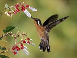Картинки по запросу фото птица в полете