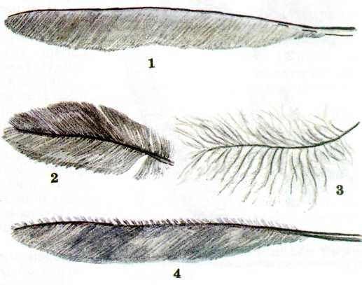 1. Гремучая змея. Коралловый аспид. Песчаная эфа. Щитомордник. Морская змея голубой ластохвост. Обыкновенный уж