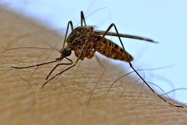 Эпидемия лихорадки денге в Парагвае достигла пика: умерли 48 человек / Новостная лента СМИ Удмуртской Республики. Новости Удмурт