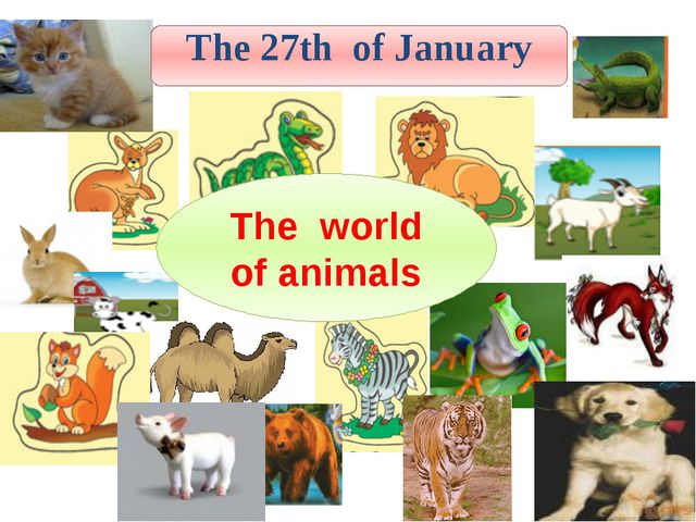 The world of animals The 27th of January