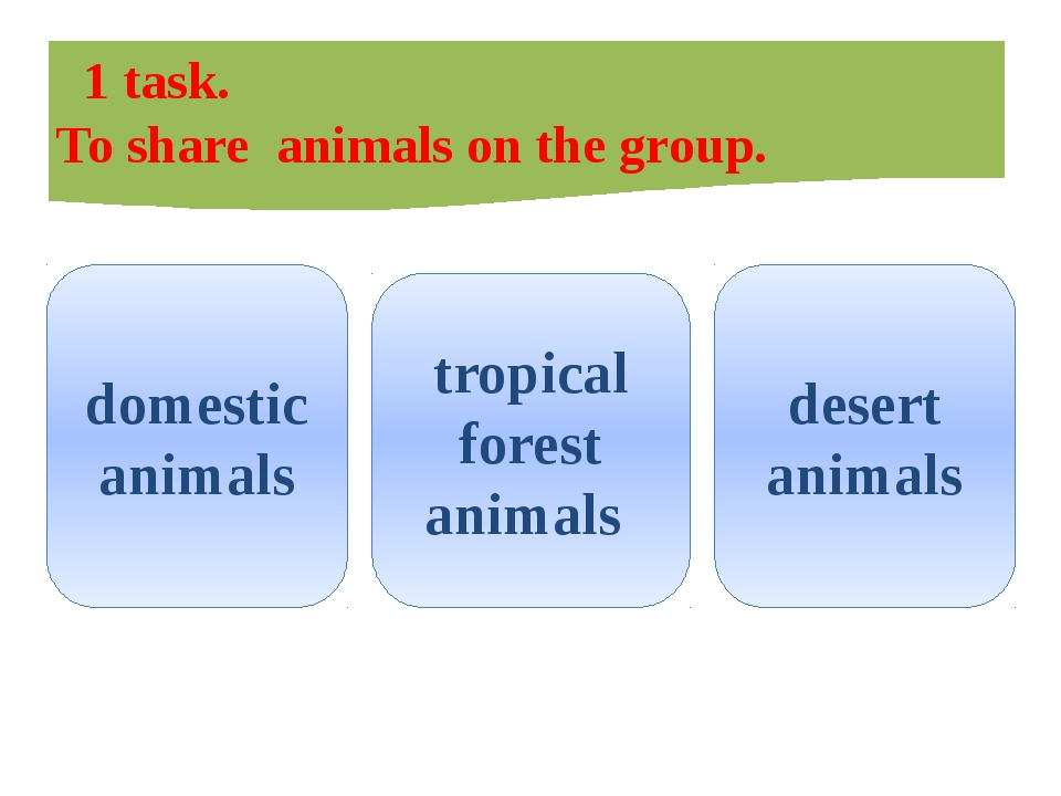 1 task. To share animals on the group. domestic animals tropical forest anim...