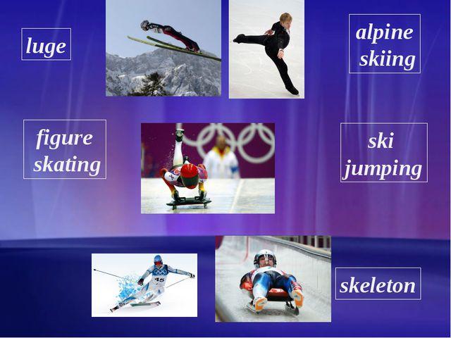 luge figure skating alpine skiing ski jumping skeleton