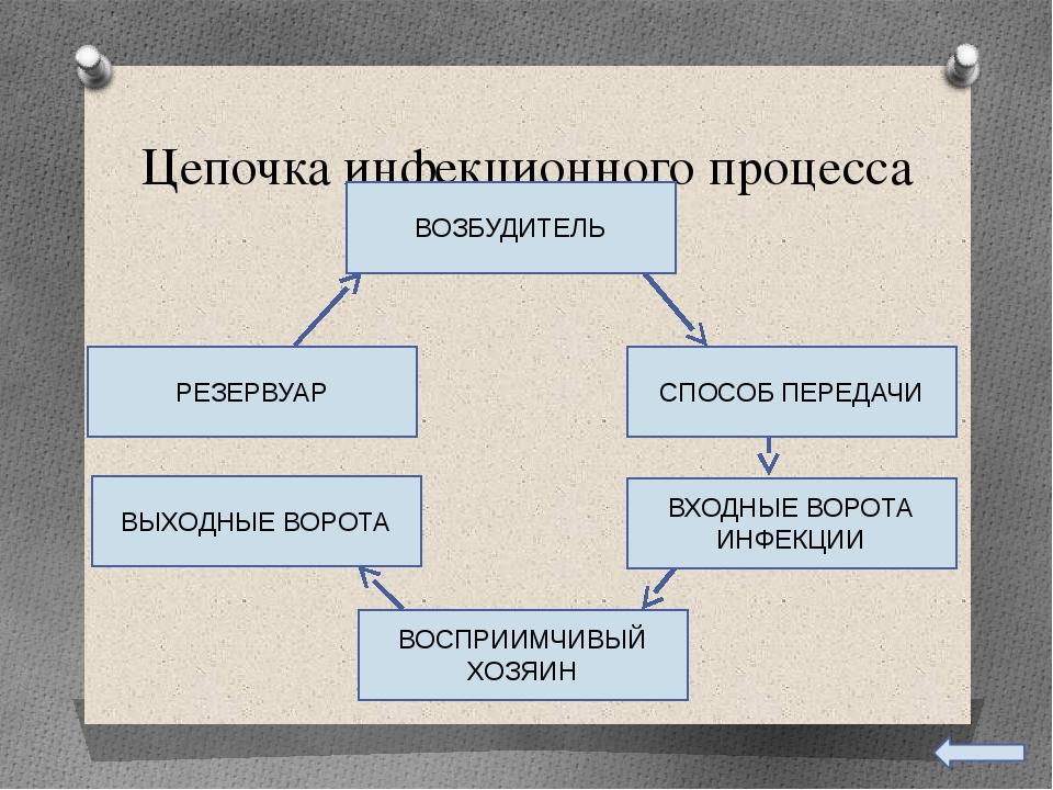 Цепочка инфекционного процесса