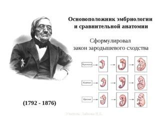 Карл Макси́мович Бэр (1792 - 1876) Основоположник эмбриологии и сравнительно