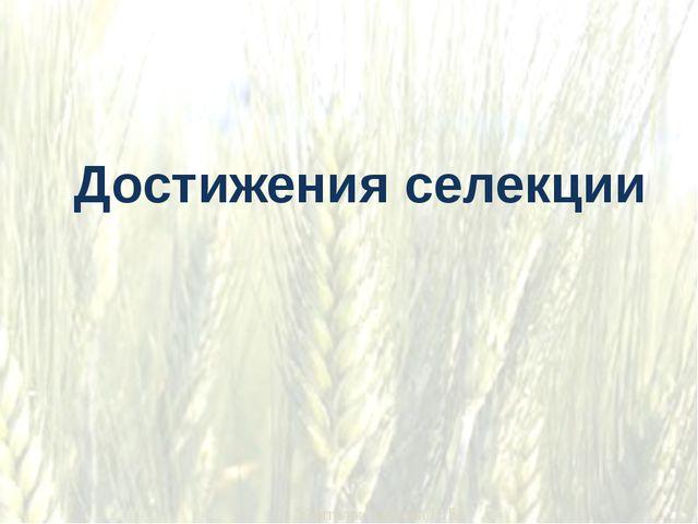 Достижения селекции Учитель: Зайкова Н.Б.