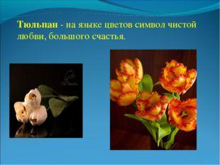 Тюльпан - на языке цветов символ чистой любви, большого счастья.