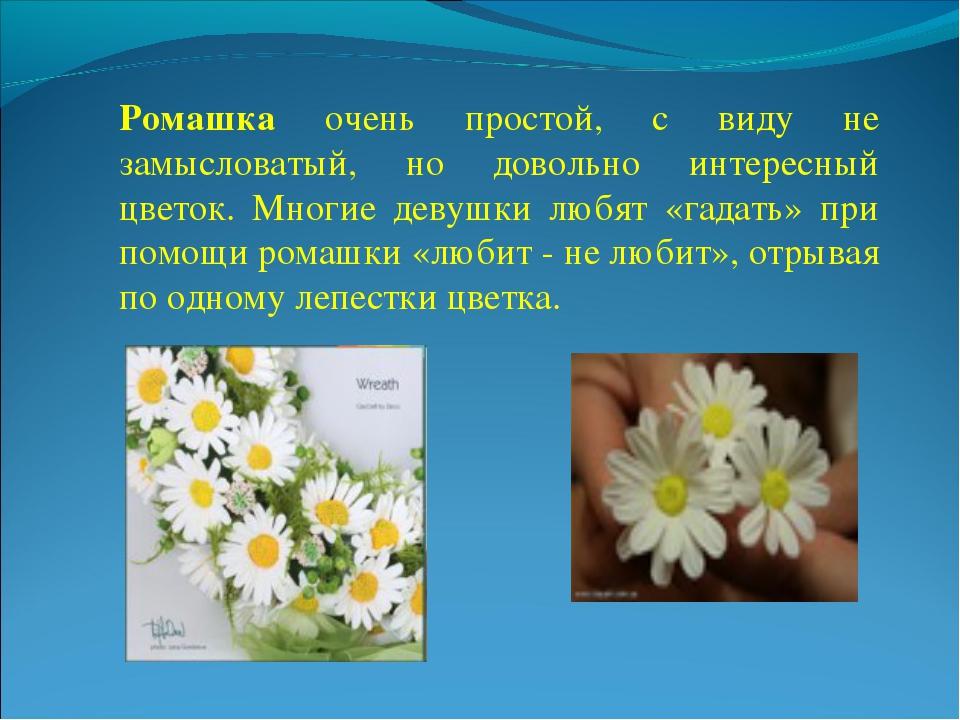 Ромашка очень простой, с виду не замысловатый, но довольно интересный цветок...