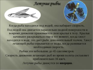 Когда рыба находится под водой, она набирает скорость. Под водой она двигаетс