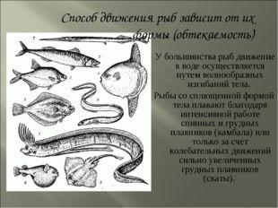 У большинства рыб движение в воде осуществляется путем волнообразных изгибан