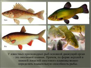 У известных пресноводных рыб основной движущий орган - это хвостовой плавник.
