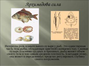 Интересна роль плавательного пузыря у рыб. Это единственная часть тела рыбы,
